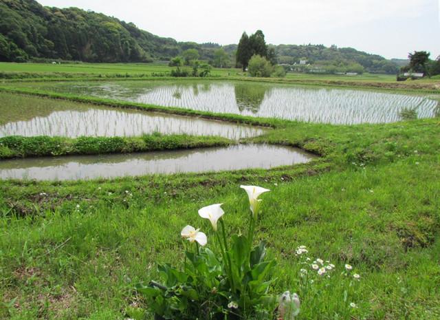 01 岡飯田南谷の風景