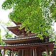 17 深緑に映える海住山寺五重塔