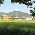 08 纒向石塚古墳から三輪山を望む
