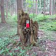 24 巨木の切株のお地蔵様-3